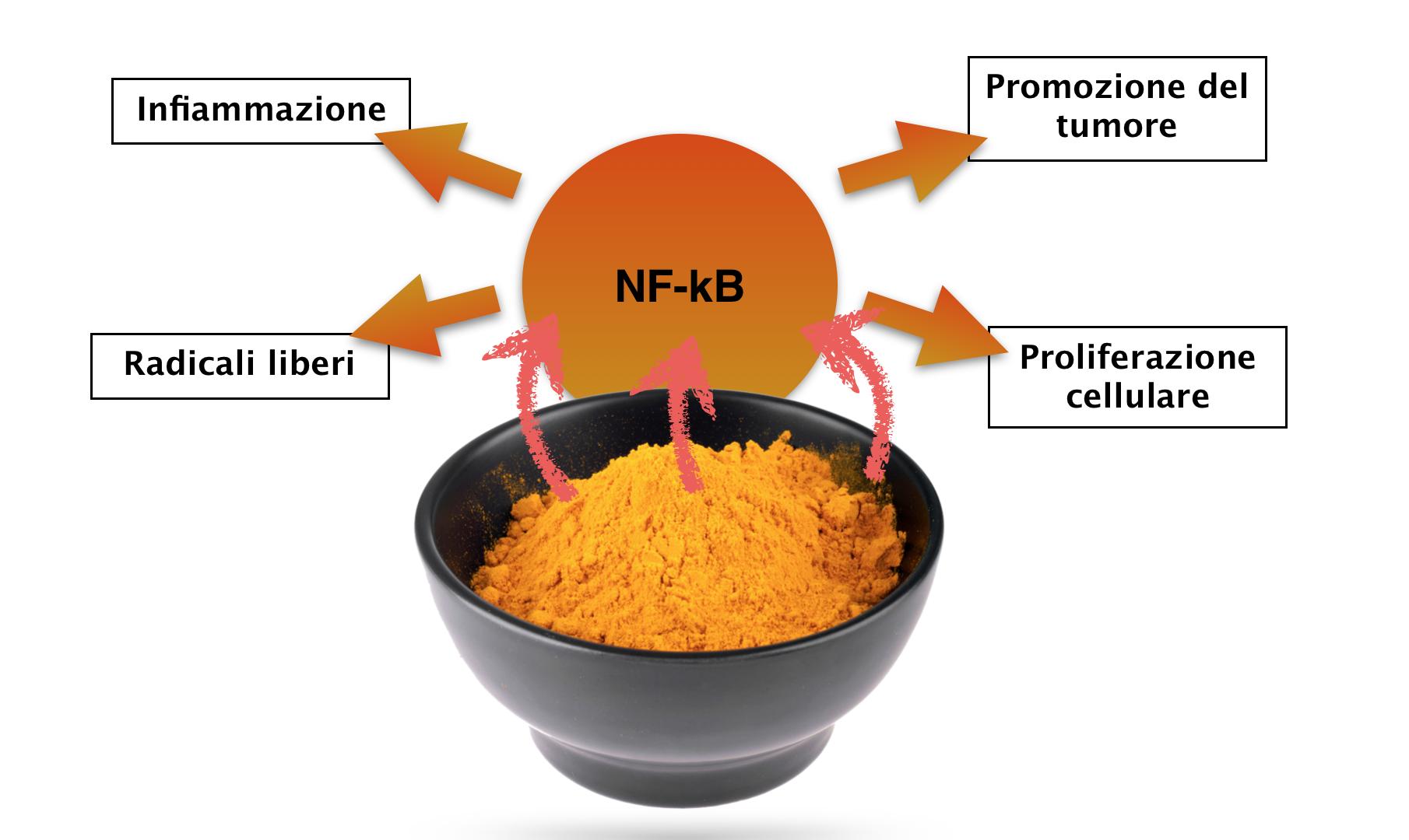 La battaglia della curcuma contro il fattore NF-kB: ecco come la curcuma agisce contro l'infiammazione e come tu puoi godere di questo beneficio senza cadere nella trappola della curcuma alimentare.