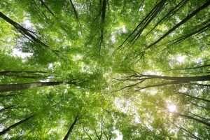 Rimedi Naturali Biopotenziati foresta