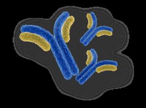 antibodies Immunoeleva